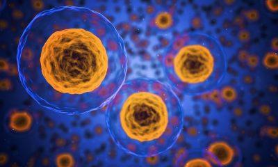 Wijaya platinum clinic apa itu stem cell atau sel punca